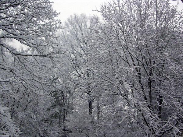 Feb2006a_600.jpg
